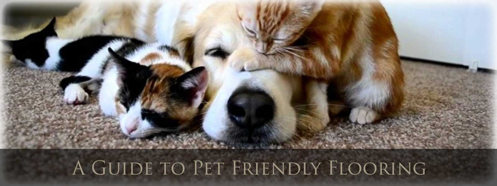 A Guide To Pet Friendly Flooring 1