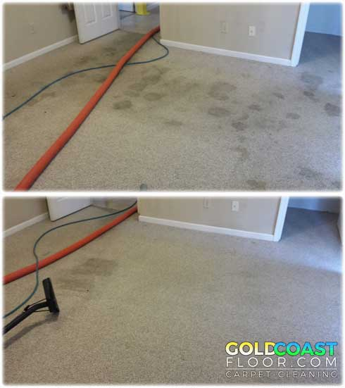 Best Carpet Cleaning Company For Cat Urine