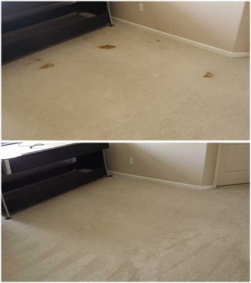 pet-urine-treatment-carpet-cleaning-rocklin-coldwater-drive